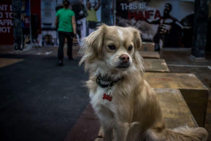 גם כלבים מוזמנים לקרוספיט חיפה